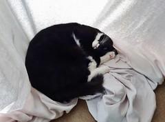 Laundry (Elisa1880) Tags: blackandwhite white cat was kat sheet wit laken laundy koschka