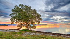 Sunset / Wallis Lake (Young Ko) Tags: trees light sunset red sky seascape reflection green nature water beautiful yellow clouds composition landscape amazing interesting nikon colorful cloudy awesome atmosphere overcast nsw lonely wallislake tiona bootibooti southwallislakeforster