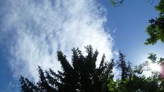 P1080618 (chemtrailchaser) Tags: chemtrail chemtrails contrail contrails cloud clouds cloudseeding greenhouse globalwarming climatechange geoengineering climateengineering weathercontrol aluminum barium strontium nanoparticles nanoaerosols poison poisonskies haarp airplane jet jettrails airforce sky weather globaldimming usa daytonohio wpafb classified sunset outdoors nature