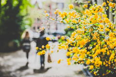 Springtime in Amsterdam (Miguel Da Silva Photography) Tags: street city flowers portrait people streets flower color nature netherlands amsterdam weather yellow spring good streetphotography full portraiture persons anonymous sprintime