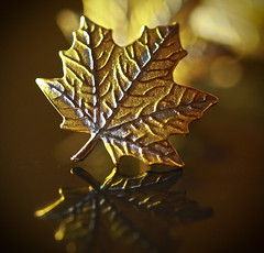 A leaf of Gold (Chandana Witharanage) Tags: macromondays theperiodictable macro macrophotography goldjewellery earring bokeh bokehpendent reflection gold goldau{atomicno79
