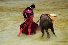 Cayetano Rivera Ordez (Fotomondeo) Tags: espaa spain bull alicante bullfighter toros bullfight toro bullring matador torero plazadetoros alacant corridadetoros fogueres hogueras hoguerasdesanjuan cayetano cayetanoriveraordez fujifilmxm1