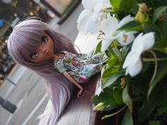 Pullip Lara (Custom) (sh0pi) Tags: italien summer italy holidays doll ooak sommer urlaub lara mocha mio pullip kit custom puppe jesolo 2016