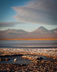 High altitude Chile (ckocur) Tags: chile atacama sanpedrodeatacama northernchile atacamadesert
