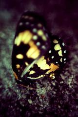(leila.penteado) Tags: color brasil butterfly 50mm photo borboleta leila memento photografy memento832 leilapenteado leilapenteadofotografa