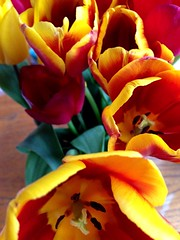 Ninety six. Open mouths (sarahjanequinn) Tags: flowers tulips iphone project365 uploaded:by=flickrmobile flickriosapp:filter=nofilter