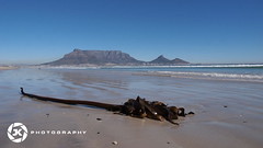 Seaweed And Table Mountain (jan-krux photography) Tags: ocean blue sea sky mountain seaweed beach water landscape capetown e5 westerncape zd southaafrica 1260mm
