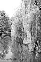 Tranquility (sethswife) Tags: blackandwhite chicago cemetery pond peaceful willowtree gracelandcemetery
