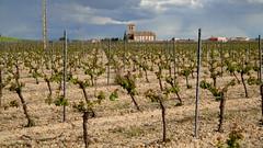 Viñedos en tierras de Valladolid. Vineyards in lands of Valladolid. (lumog37) Tags: church vineyard wine iglesia vino viñedo