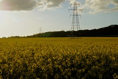 Pylons (Sarah Marston) Tags: trees field yellow clouds sony may hampshire alpha pylons rapeseed wickham a65 2013