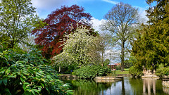 The Pond (lincoln_eye) Tags: uk trees england water leaves clouds reflections spring pond blossom unitedkingdom branches may sunny arboretum bluesky gazebo lincolnshire lincoln gb trunks bandstand
