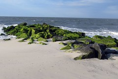 Algae on the rocks (runneralan2004) Tags: newjersey capemay