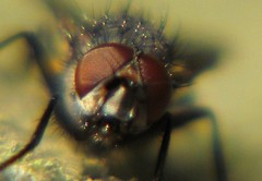 Alien Head (TheNBman) Tags: canon fly insects bugs powershot lbs littlebigshot elitebugs