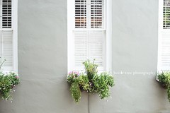 1366windows (BottleTreePhoto) Tags: sc window charleston flowerbox