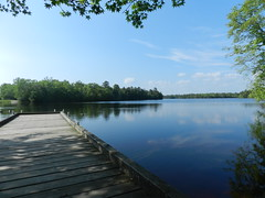 East Creek Pond (Christine_Ray) Tags: new pine forest state reserve national jersey pinelands barrens belleplain belleplaincapemayandparvin