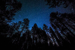 Standing Tall (zgreth) Tags: arizona stars unitedstates places astrophotography milkyway deserttotallpines