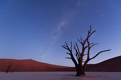 Deadvlei (3) (Monique vd Hoeven) Tags: sunset tree night stars clear milkyway deadvlei namibie