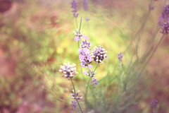 Playing with filters - Lavender (TempusVolat) Tags: slr digital canon eos mr 28mm lavender filter dslr canoneos gareth f28 fd morodo 60d canoneos60d eos60d mrmorodo garethwonfor tempusvolat
