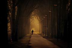 daydreamer (Zino2009 (bob van den berg)) Tags: thesecretlifeoftrees
