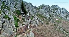 Randonnée dans le Mercantour . Le tour du Lausfer. (Tinou61) Tags: mountain nature montagne alpes sheep walk italie mouton randonnée piemont lausfer tourdulausfer