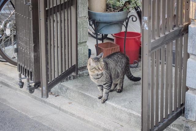 Today's Cat@2013-09-19