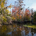 Autumn in the Swamp | New Bern, NC
