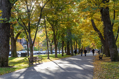 Thumbnail from Commonwealth Avenue Mall