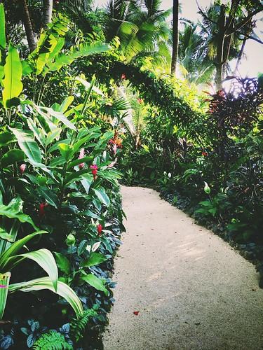 Vanuatu garden pathway