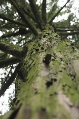 Amsterdam Vondelpark (FlixHall) Tags: trip tree green nature amsterdam europe arbres bark villes corce