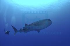 2012 11 DUNE DJIBOUTI DSC_0167