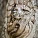 Tree Spirit 1