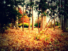 Cool Autumn (Anonymousxx20) Tags: world life new morning school original autumn trees winter shadow red favorite orange brown abstract color tree cute green art fall nature colors beautiful beauty grass leaves weather yellow illustration dark season landscape happy gold golden leaf cool colorful pretty different seasons bright time random earth unique background gorgeous branches air year creative days september crisp barebranches treetrunks