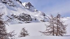 vers le refuge du Chardonnet (2223m) (chogori20) Tags: winter mountain snow alps tree bird montagne alpes landscape hiver val neige paysage arbre oiseau refuge nvache chardonnet clave
