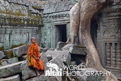 Young Monk (Altai World Photography) Tags: world park boy orange tree heritage overgrown temple site asia cambodia south young roots monk unesco east southeast siemreap angkor ta khm archeological prohm angkorarcheologicalpark