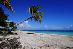 Cuban beach (harry.cutts) Tags: cuba palmtrees beaches