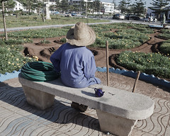 * (Cees Willems) Tags: street sun plant man color colour hat garden bench view drink earth dirt morocco maroc sit rest essaouira moroccan gardener 35l ceeswillems 5dm2