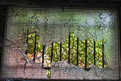 CONSONNO (Adalpina Psyko) Tags: dei lecco città paese disagio abbandono consonno degrado balocchi