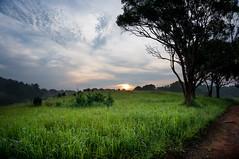 Khao Yai Thailand (nutthapongthanadkit) Tags: sunrise landscape thailand sony grassland korat khaoyai nex6