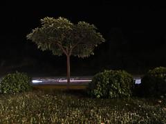 IMG_4818 (Fahim Kidwai) Tags: road pakistan tree night canon slowshutter islamabad sx50hs