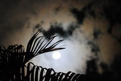Luna tras el follaje (TobiTr3s) Tags: blanco noche luna cielo nube