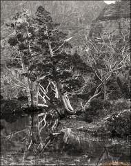 Artists Pool_b&w (mckenart) Tags: monochrome blackwhite bush australia bushwalking tasmania kodachrome wilderness cradlemtn pencilpine artistspool