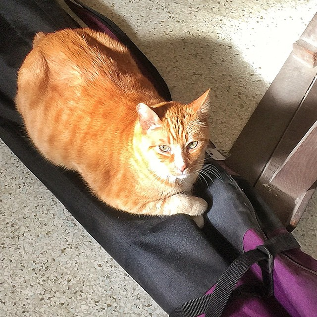 Happy Caturday from Bear. If I put something down on the floor even skis and ski poles in a bag hell lay on it. Hell stay on it even longer if its in the sun #cat #pet #photooftheday #picoftheday #bestoftheday #cool #cute #nofilter #beautiful #gato #ch