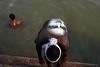 Face - Varanasi, India (Maciej Dakowicz) Tags: india water face river bath tshirt varanasi ganga ganges ghat