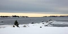 Färglöst (Explore 2015-02-08) (nillamaria) Tags: winter grey vinter colorless grått fotosondag fs150208 farglost