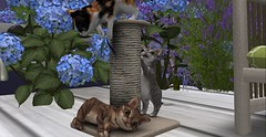 My New Roomies (Enya T) Tags: playing secondlife kitties roomies enya scratchingpost