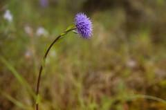 _FEL7770 p (Flix Prez Antn) Tags: naturaleza pentax alava euskadi k5 santacatalina