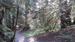 20160331_092204 (ks_bluechip) Tags: creek evans trails preserve sammamish usa2106