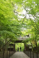 temple in green (k n u l p) Tags: green japan temple kyoto gate sony fresh    1670mm nex7 sel1670z