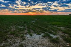 L59A7157-HDR.jpg (kendra kpk) Tags: pink blue sunset green field grass clouds southdakota landscape spring may winner hdr 2016 trippcounty dakotawindsphotography daktawindsphotocom