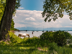A day at Ammersee (iEiEi) Tags: sky horse lake tree green water clouds germany bayern deutschland bavaria see nikon wasser outdoor himmel wolken bluesky grn nikkor pferde ammersee baum d300 nikond300 ausenaufnahme 1685mmf3556gvr ieiei